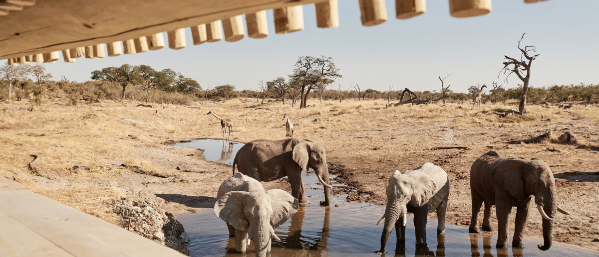 The Telegraph TRAVEL: Belmond Savute Elephant Lodge